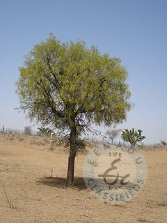 Agricultural Land And House For Sale In Gadivamula Kurnool