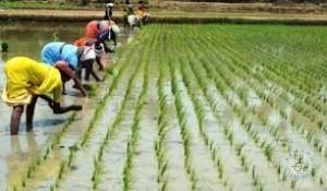 5 ACERS LAND FOR SALE WARANGAL DISTRICT KAMALAPUR VILLAGE MARRIPALLY GUDEM