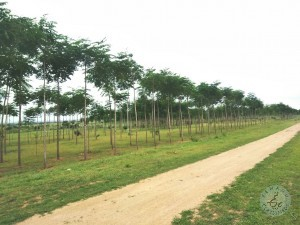 farm land plots for sale in hy