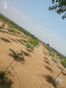 property for sale in rangareddy