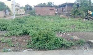 plot for sale in narsampet warangal