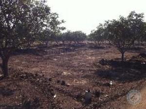 Agricultural Lands For Sale In Shankerpalli Hyderabad