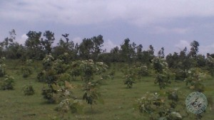 Agricultural Land For Sale In Kamareddy Nizamabad