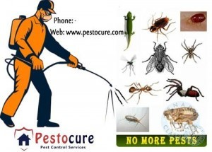 Pest Control Service Provider In Hyderabad