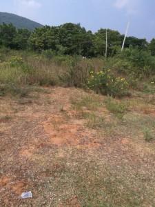 Plots For Sale In Bakkanapalem Vizag