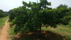 Farmland Plots For Sale In Rangareddy