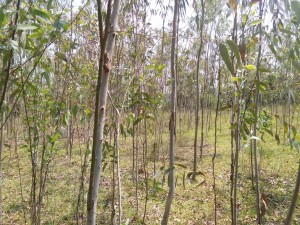 Land For Sale In Kothavalasa-vepada Road Visakhapatnam