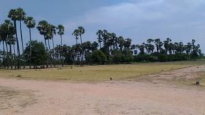 Plots For Sale In Chilakaluripeta Guntur