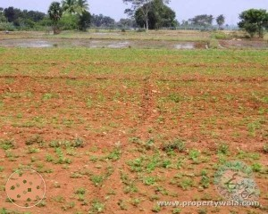 agriculture land for sale in balanagar mahaboobnagar