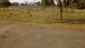 Plots For Sale In Neelakundeelu Visakhapatnam