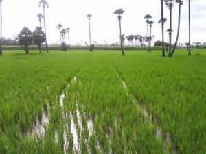 Agricultural Land For Sale In Moturu Krishna(incl Amaravati(vijayawada)