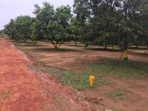 Plots For Sale In Mailavaram Krishna Amaravati, Vijayawada