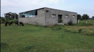 dairy farm for sale in jandadibba nellore