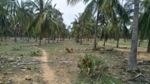 Land For Sale In Bheemili Visakhapatnam