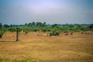 Land For Lease In East Godavari