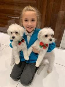 kc champion maltese puppies for free adoption