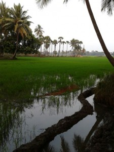 Land For Sale In Korumilli East Godavari