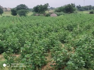 Land For Sale In Gundlapalli Nalgonda