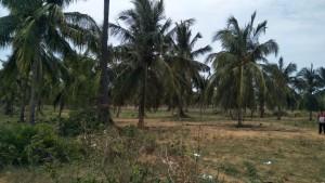 Agricultural Land For Sale In Annavaram Visakhapatnam