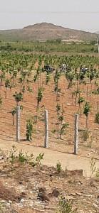 Land For Sale In Kanigiri Prakasam