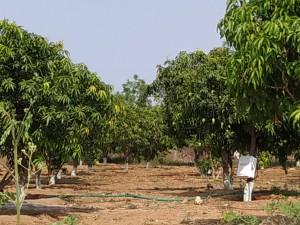 Land For Sale In Maheswaram Hyderabad