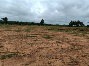 Plots For Sale In Pochampally Hyderabad