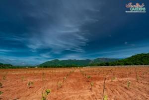 Lands For Sale In Visakhapatnam