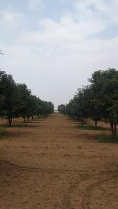 Agricultural Lands For Sale In Visannapeta Vijayawada