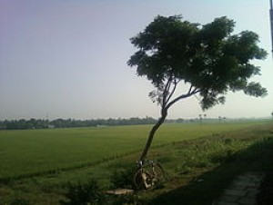 Land For Lease In Kovvur Hyderabad