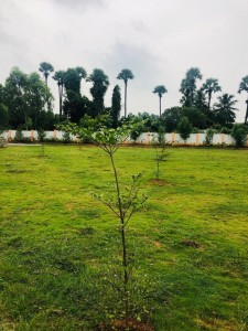 Plots For Sale In Nidigattu Visakhapatnam