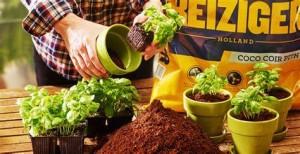 home plants & gardening in visakhapatnam